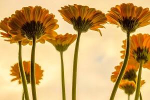 flowers-3705716_1920