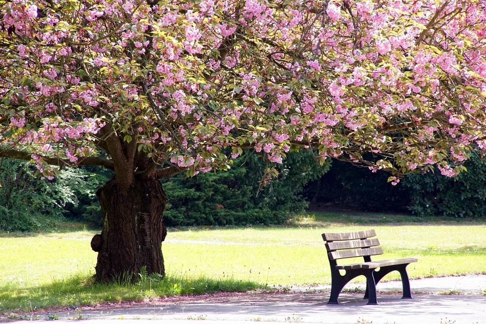 Что такое генограмма, или как построить свое родовое дерево