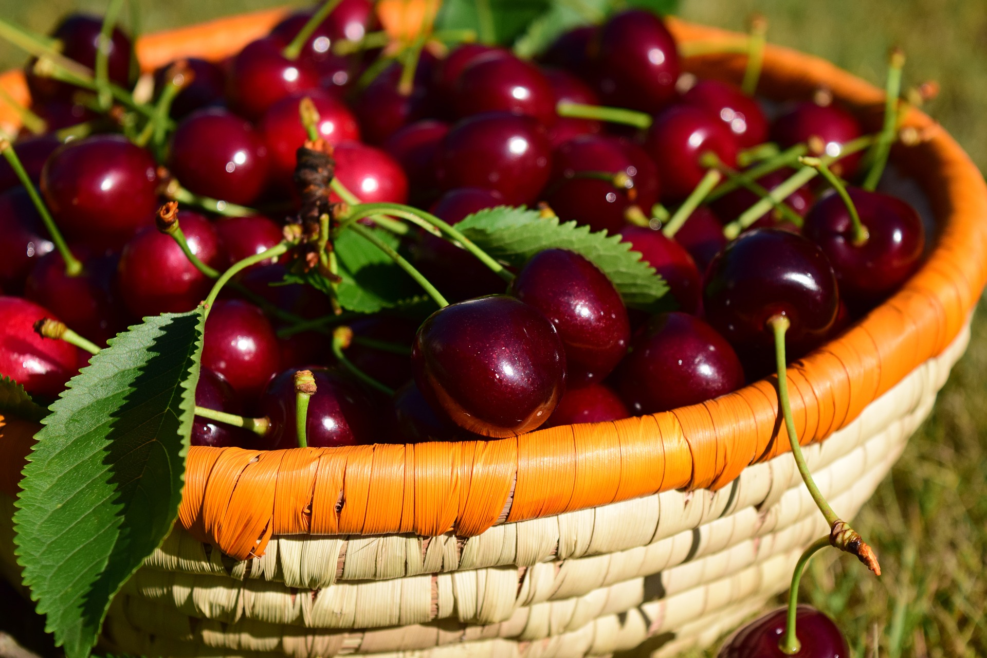 cherries-1509127_1920